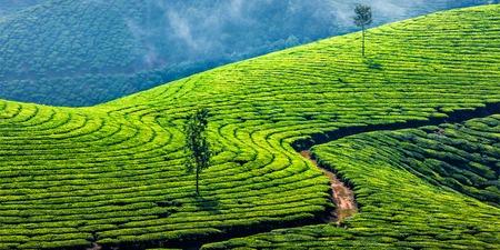 Photo pour Kerala India travel background - panorama of green tea plantations in Munnar, Kerala, India - tourist attraction - image libre de droit