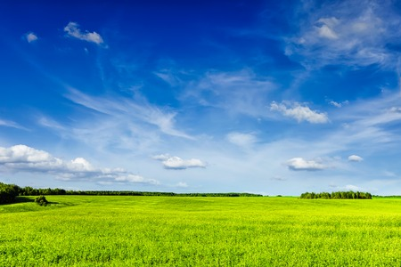 Photo pour Spring summer background - green grass field meadow scenery lanscape with blue sky - image libre de droit