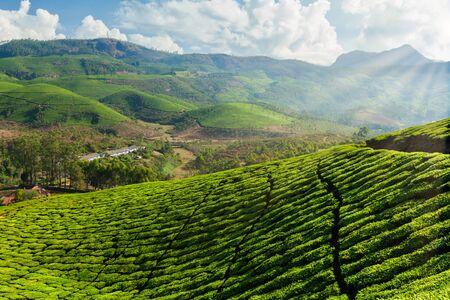 Photo pour Tea plantations in India - image libre de droit
