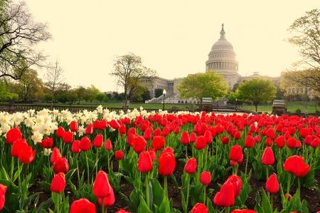 US Capitol in sunrise, Washington DC, USA