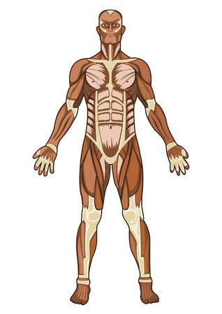 Illustration for Human anatomy medical concept illustration - Royalty Free Image