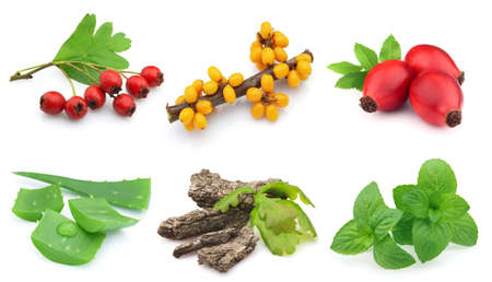 Herbs and berries on a white background