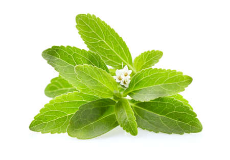 Photo for Stevia leaves on white background - Royalty Free Image