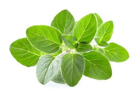 Photo pour Oregano leaves on white background - image libre de droit