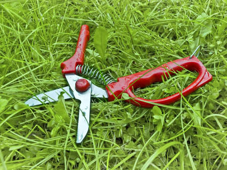 Wet garden shears on grass
