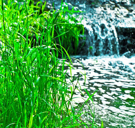 grass near the brook