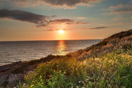 sunset flower meadow and ocean during spring with vivid bright colors over Italian sea at Sardinia tourism and holliday