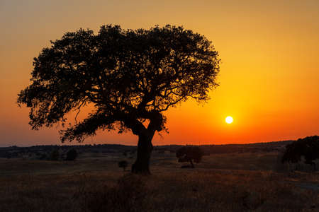 Photo for Single tree in a wheat field on a background of sunset, beautiful scenery  - Royalty Free Image
