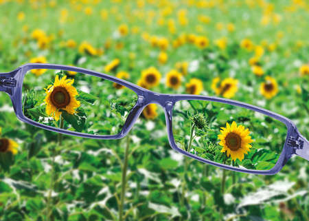 View from reading eyeglasses on beautiful nature view, healthy eyesight concept