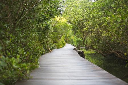 Path in Mangrove forest in Bali