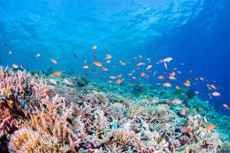 Photo pour Coral Garden - image libre de droit