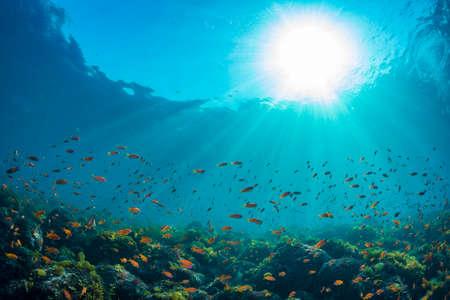 Photo pour Seaweed and School of Sea Goldie - image libre de droit