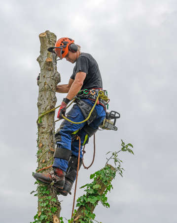 Photo pour Tree Surgeon or Arborist with a chainsaw and wearing safety equipment on a tree top. - image libre de droit