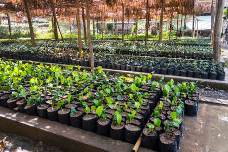garden with green plants under a canopy. Agriculture in India. garden bed. cultivation of fruit trees, flowers, vegetables in pots on a bed