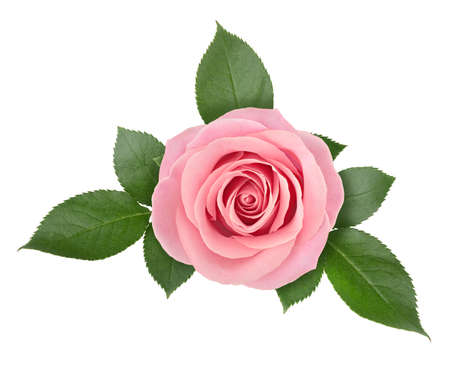 Photo for Rose flower arrangement isolated on a white background with clipping path. - Royalty Free Image