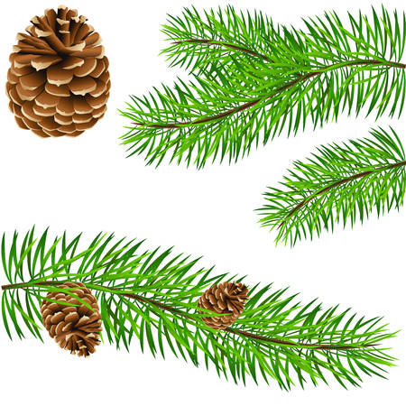 pinecone and pine branches