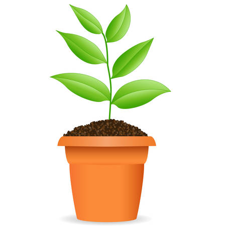 Illustration for Green plant in a flower pot - Royalty Free Image