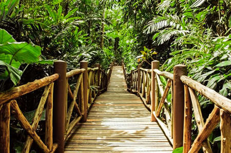 Wood Bridge In The Jungle