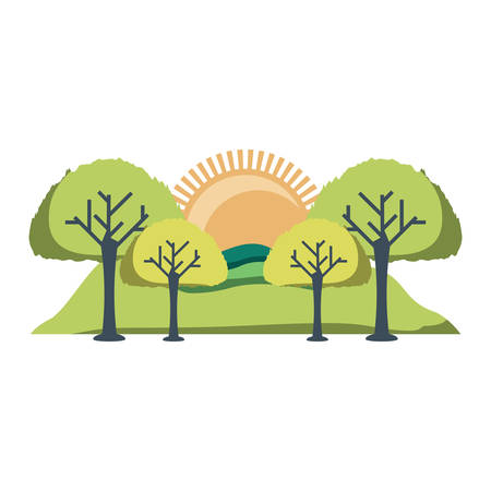 Landscape with sun and trees over white background, colorful design. Vector illustration