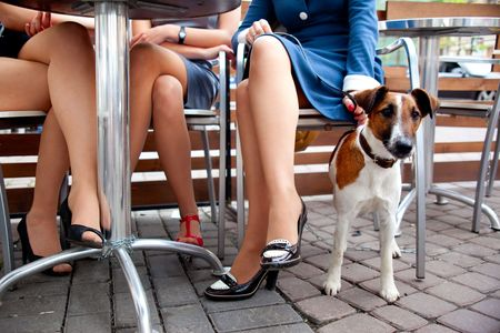 cute dog waiting his mistress while she's chatting with her friends