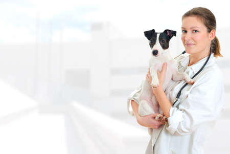 Female veterinarian holding jack russell terrier on hospital background