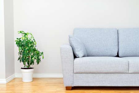 Gray sofa and green plant. Room interior.