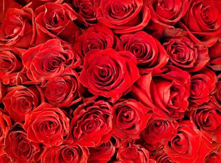 Photo pour A lot of red Roses background. Close up photo. - image libre de droit