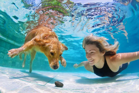 Photo pour Smiley woman playing with fun and training golden retriever puppy in swimming pool - jump and dive underwater to retrieve stone. Active games with family pets and popular dog breeds like a companion. - image libre de droit