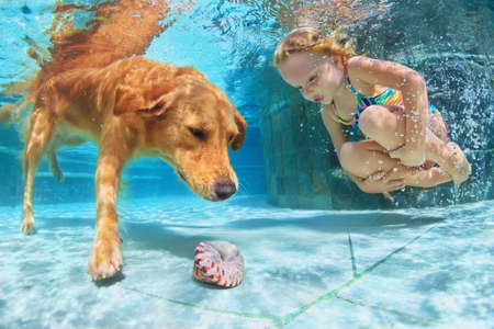 Photo pour Little child play with fun and train golden labrador retriever puppy in swimming pool - jump and dive underwater to retrieve shell. Active games with family pets and popular dog breeds like companion. - image libre de droit