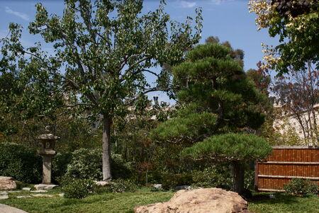 Japanese Garden in Balboa Prak, San Diego