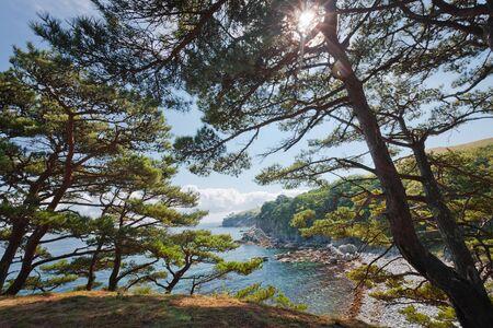 seascape, cedar on a rocky island