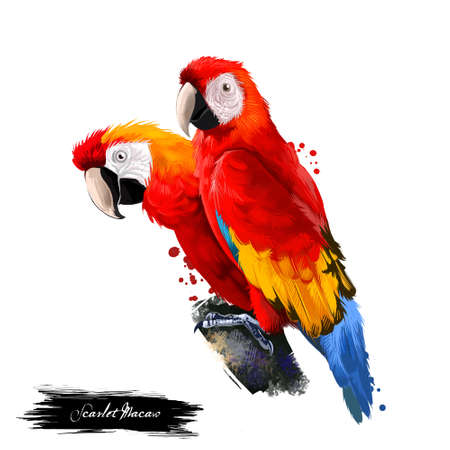 Foto per Scarlet Macaw digital art illustration isolated on white. Large red, yellow, and blue South American parrot member group of Neotropical parrots called macaws. Pair of parrots sitting on branch - Immagine Royalty Free
