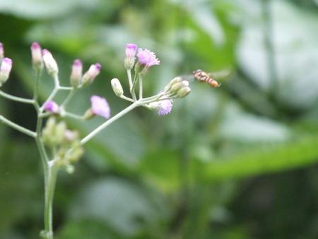 Beautiful wasps