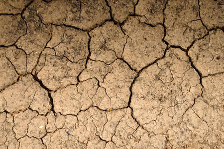 Dry soil textured background