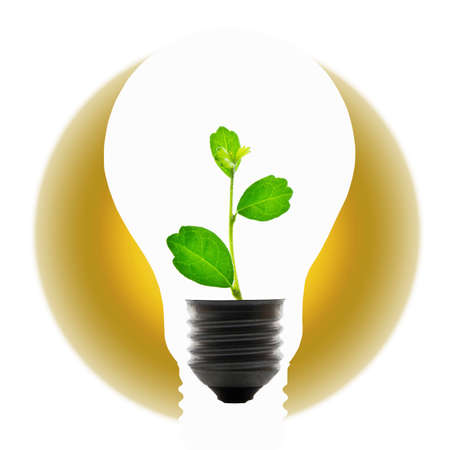 Plant in light bulb for global warming concept