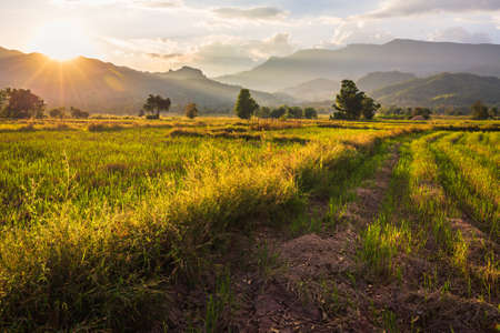 Photo pour Farmland after harvest, beautiful countryside scenic before sunset in Lom Kao, Petchabun province of Thailand - image libre de droit
