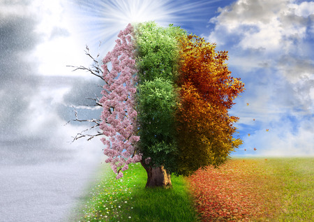 Foto de Four season tree, photo manipulation, magical, nature - Imagen libre de derechos