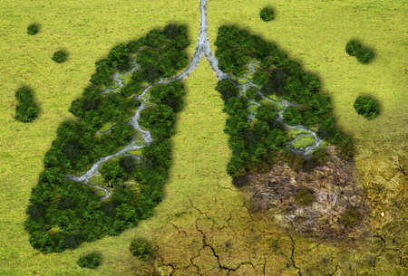Photo pour Forest in a shape of lungs - deforestation and global warming concept - image libre de droit