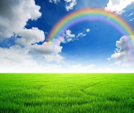 Rice field green grass blue sky cloud cloudy landscape background yellow rainbow