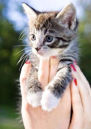 closeup picture of female hands holding little kitty