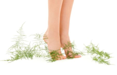 picture of female legs with green plant over white