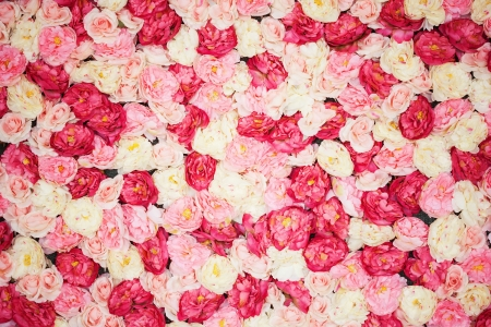 Photo for bright picture of background full of white and pink peonies - Royalty Free Image