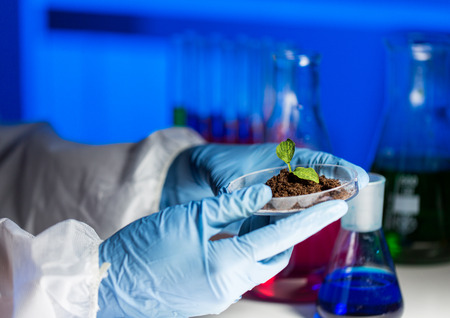 close up of scientist hands holding petri dish with plant and soil sample in bio laboratory