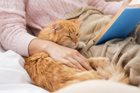 Photo pour red cat and female owner reading book at home - image libre de droit
