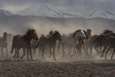 snowy horses in front of a snowy mountain