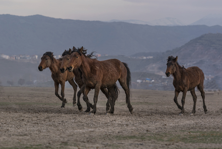 wild horses separated from their group