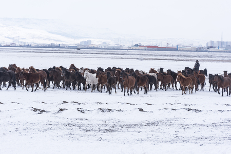 horses in cold, horses waiting on snow