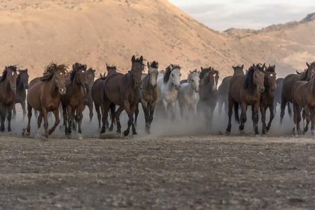 yearning horses, freedom and nature