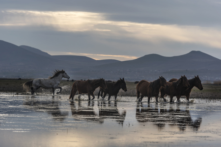 reflection of horses in the water