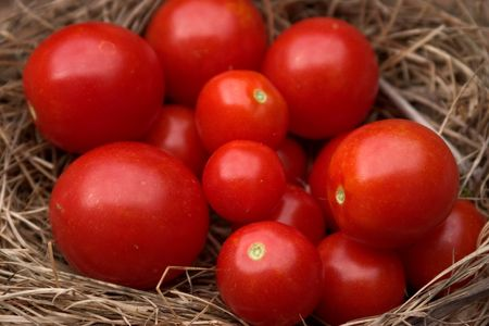 Ripe cherry tomatoes sitting in a nest
